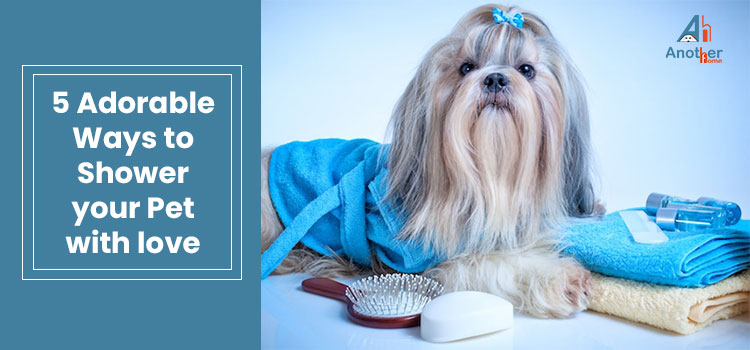 5 Adorable Ways to Shower Your Pet With Love