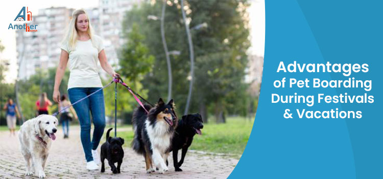 Benefits of Pet Boarding During Festivals & Vacations