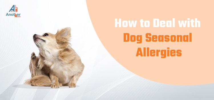 How to Deal with Dog Seasonal Allergies?