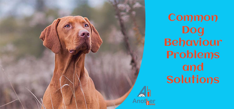 6 Common Dog Behavior Problems and Solutions