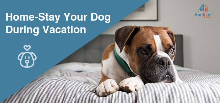 Home-Stay Your Dog During Vacation