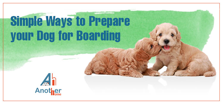 5 Simple Ways to Prepare your Dog for Boarding