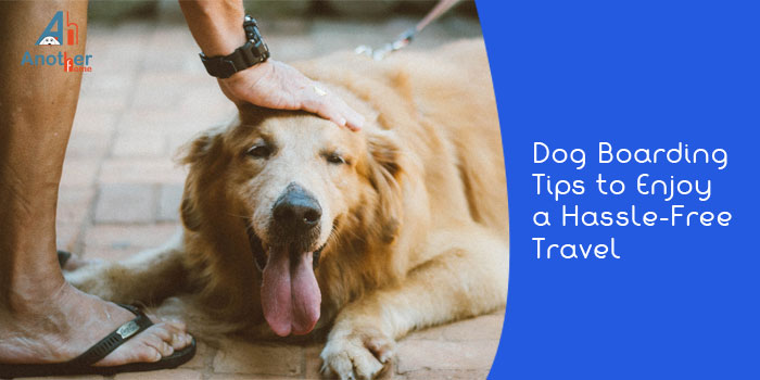 Dog Boarding Tips to Enjoy a Hassle-Free Travel